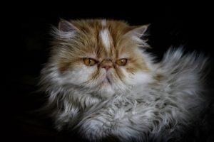 cat-2182624_1920